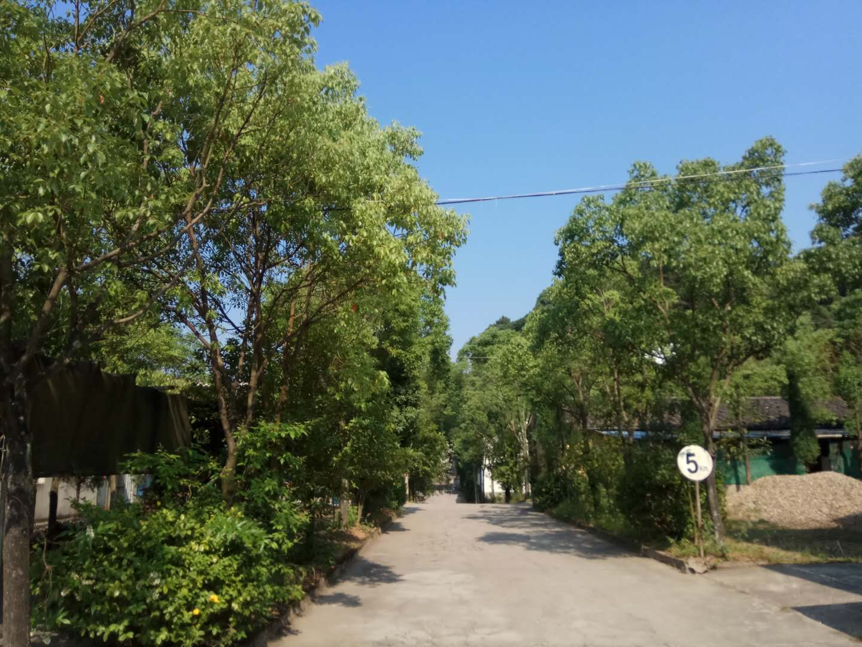 公司厂区道路