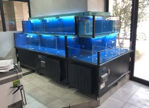 工程实例:社区生鲜超市海鲜池
