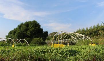 项目案例:惠州特石有机农场