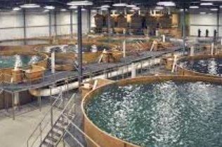 中国循环水养殖要如何运用才能...