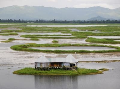 Ecological floating island