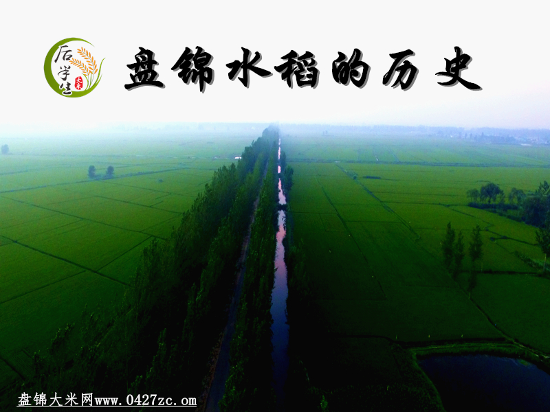 盘锦水稻的历史
