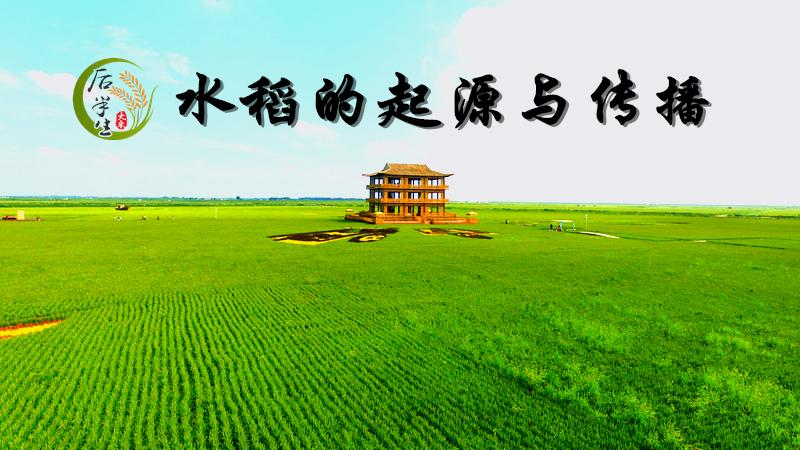 水稻的起源与传播