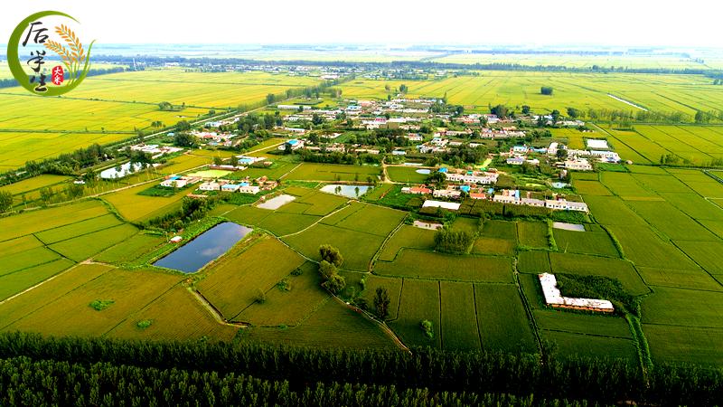 盘锦大米的发展历史