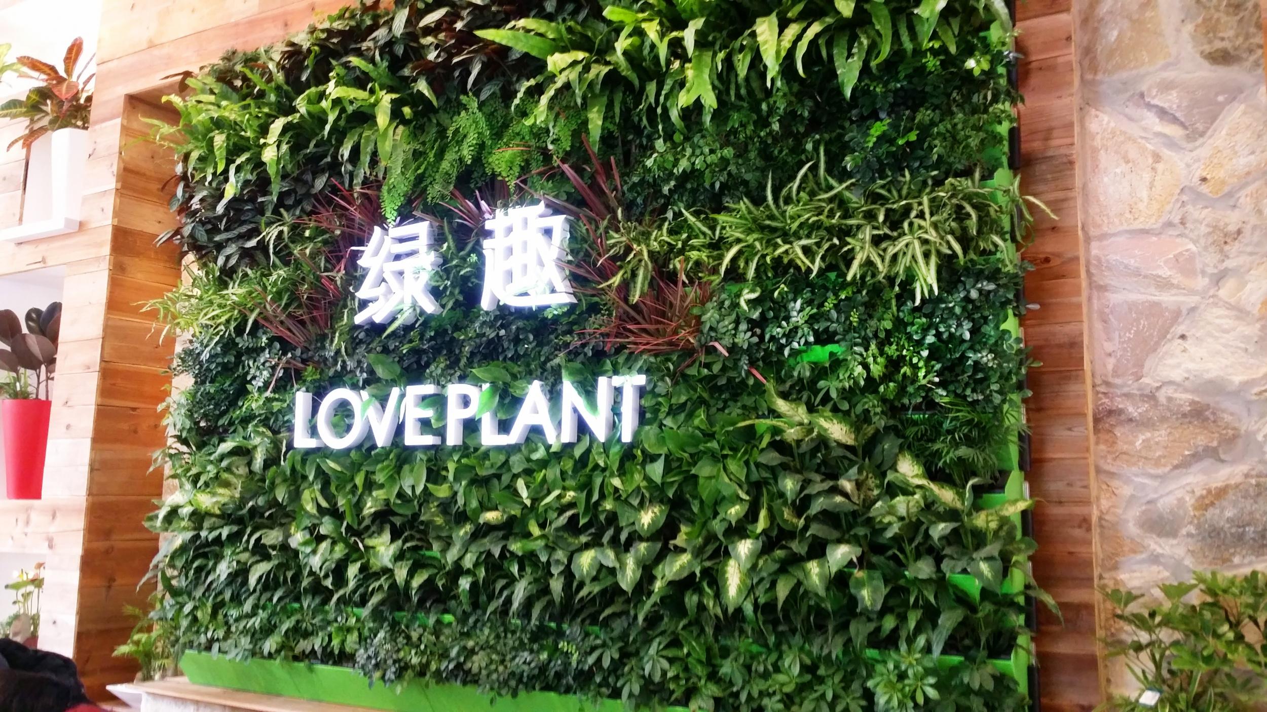 室内空气净化的实用方法——植物墙