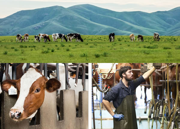 EID traceability system with livestock weighing