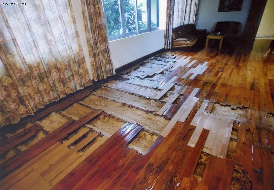 室內該怎么做白蟻防治