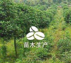 林木种子生产经营资质