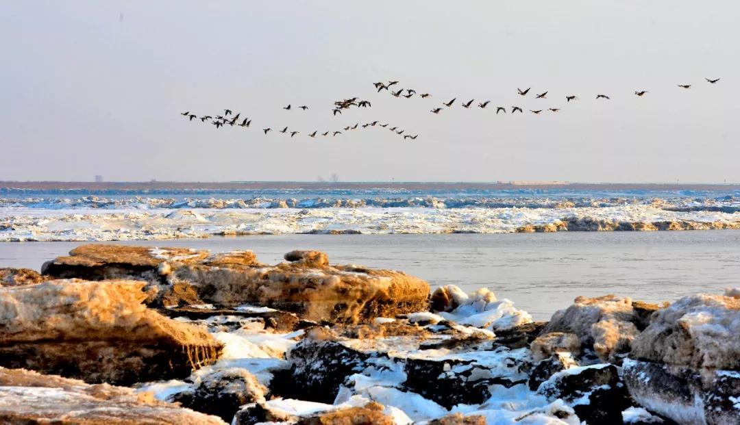 辽河口滨海湿地的冬天